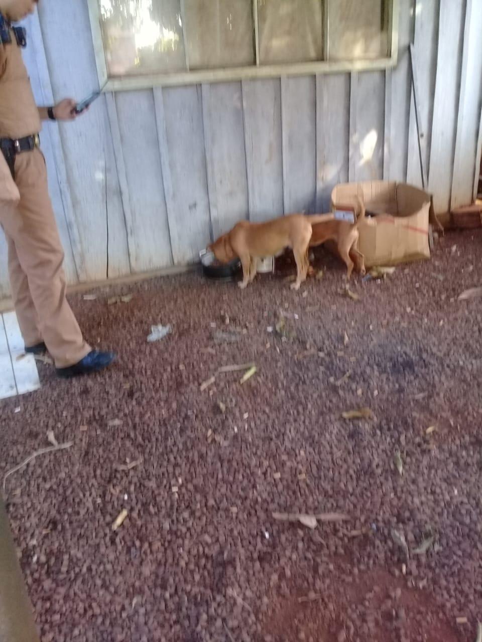 ONG registra situação de maus tratos de animais: voluntária fala sobre o caso que é reincidente